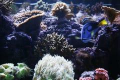 Aquarium Photo libre de droits