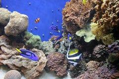 Aquarium 9 van Monterey Stock Afbeelding