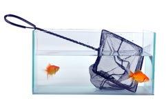 Free Aquarium Stock Photography - 9146272
