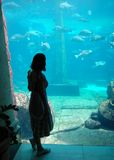 The Aquarium. The girl standing by the huge aquarium on Paradise Island, The Bahamas Stock Images