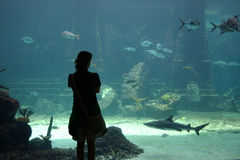 Aquarium. Silohette of girl watching shark in aquarium Royalty Free Stock Photography
