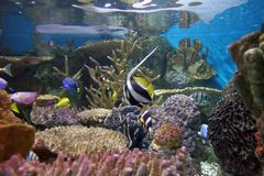 Aquarium. Tank royalty free stock image