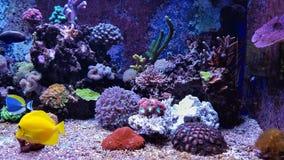 Aquarium Image libre de droits