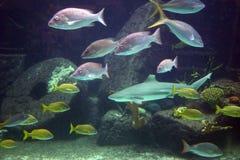 Aquarium Royalty-vrije Stock Foto