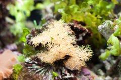 Aquarium algae Royalty Free Stock Photography