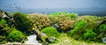 Aquarium algae, elements of flora in fishbowl Stock Photo