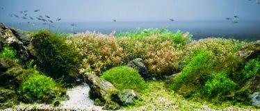 Aquarium algae, elements of flora in fishbowl stock photo