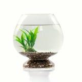 Aquarium, algen en stenen Stock Afbeelding