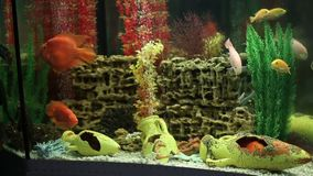 Aquarium with aquarium fish stock footage