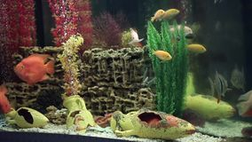 Aquarium with aquarium fish. Aquarium with an aquarium fishes stock video