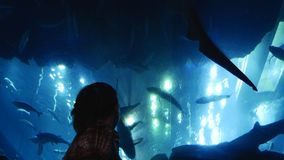 Aquarium auf der Decke stock footage