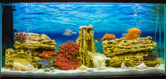 Aquarium avec des poissons (¼ и de ‹Ð±ÐºÐ°Ð de  Ñ€Ñ de ¼ Ñ de ариуРde ² de  кРde Ð) Photos libres de droits