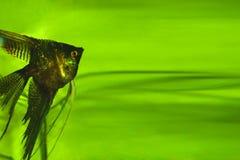 Aquarium avec des poissons Images libres de droits