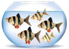 Aquarium avec des poissons Illustration Libre de Droits