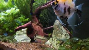 Aquarium avec des poissons banque de vidéos