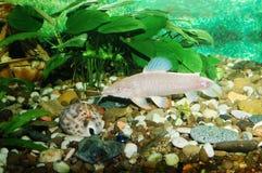 Aquarium avec des poissons. Thème vert Images libres de droits