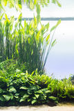 Aquarium avec la plante aquatique et les animaux Image stock
