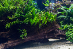 Aquarium avec la plante aquatique et les animaux Images stock