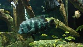 Aquarium avec les poissons exotiques banque de vidéos