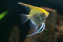 Aquarium avec quelques fisches tropicaux Photographie stock libre de droits