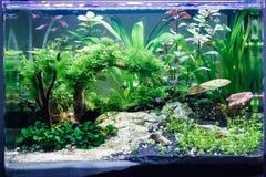 Aquarium avec quelques poissons tropicaux Photographie stock libre de droits