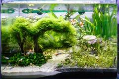 Aquarium avec quelques poissons tropicaux Photo libre de droits