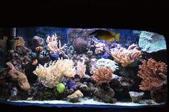 Aquarium background Royalty Free Stock Image