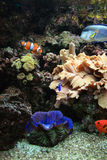 Aquarium background Royalty Free Stock Photo