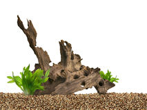 Aquarium background. Driftwood,plant and gravels Stock Photography