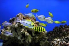 Aquarium background Royalty Free Stock Photo