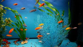 Aquarium background blue calm fish swim grass stock video footage