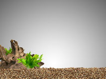 Aquarium background. Driftwood,plant and gravels Royalty Free Stock Image
