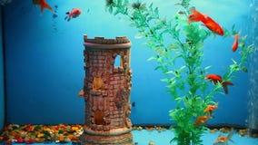 Aquarium background fish blue calm swim grass stock video footage