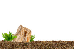 Aquarium background. Rocks and underwater plant Royalty Free Stock Photography