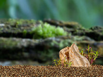Aquarium Background. Rocks and underwater plant Royalty Free Stock Image