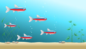 Aquarium background with a shaol of cardinal tetra Royalty Free Stock Images