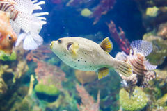 Aquarium of Barcelona Stock Image