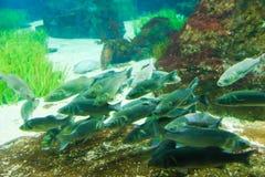 Aquarium of Barcelona Stock Images