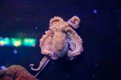 Aquarium Barcelona Stock Photography