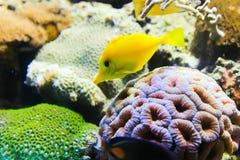 Aquarium - Barcelona, Spain Stock Image