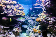 Aquarium of Barcelona - Spain Stock Photos