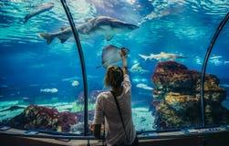 Aquarium in Barcelona. Barcelona, Spain - May 26, 2015. Woman looks at shark in Barcelona Aquarium royalty free stock photo