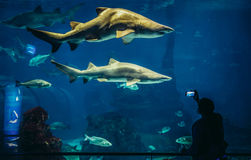 Aquarium in Barcelona Royalty Free Stock Photography