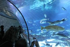 Aquarium in Barcelona, Spanien stockbilder