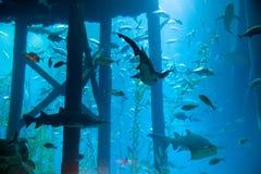 Aquarium. Big indoor aquarium with selection of different marine animals Stock Photography
