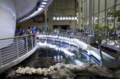 Aquarium in California Academy of Sciences. Aquarium with nice lighting in California Academy of Sciences, San Francisco, USA Royalty Free Stock Photos