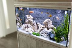 Aquarium with cichlids fish. From lake malawi royalty free stock images