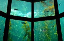 Aquarium Close-Up. Close-up of an indoor aquarium stock photography