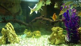 Aquarium coloré banque de vidéos