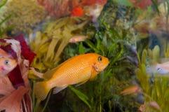 aquarium coloré Photographie stock